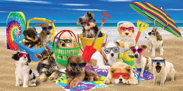Cool Dogs with Sun Glasses Beach Towel