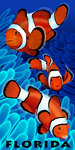 Florida Clownfish Beach Towel