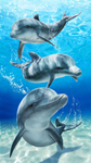 30x60 Baron Bay Dolphins Velour Fiber Reactive Beach Towel.